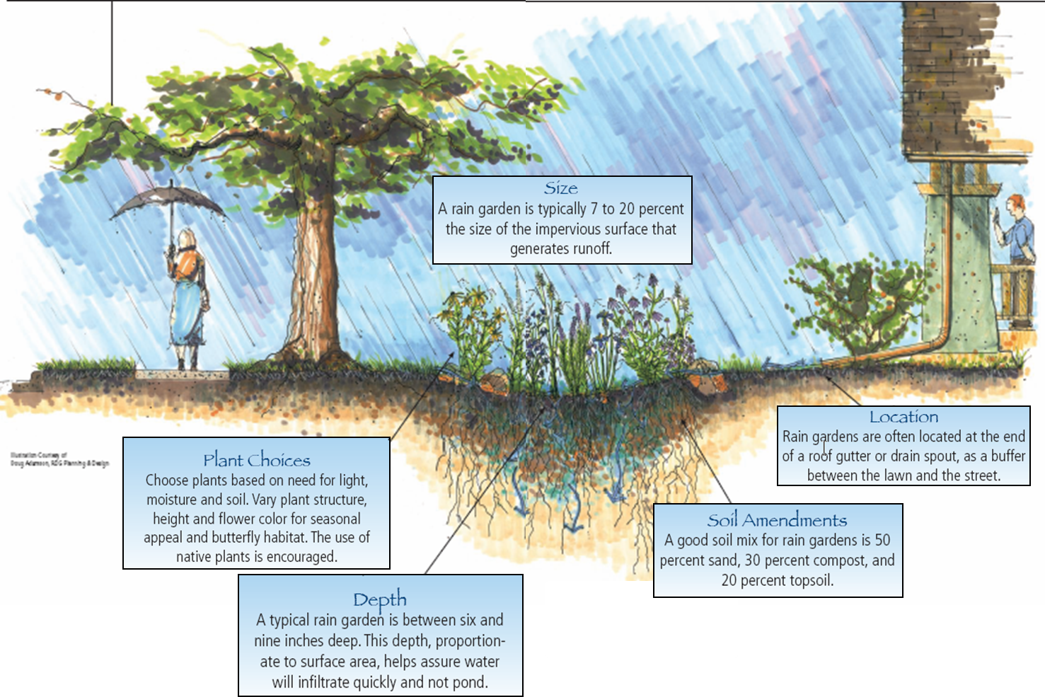 Rain garden design examples perfect home and garden design for Garden design history