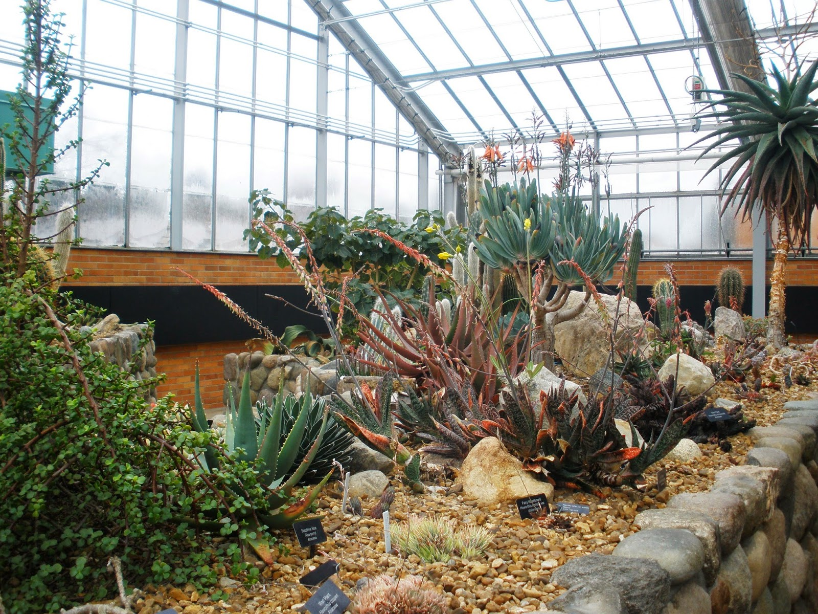 ... Conservatory Is The Arid House, Or Desert Section, Which Is Were You  Will Find Lots Of Cacti! The Paths Here Are Surrounded By Walls, Which Keep  Little ...