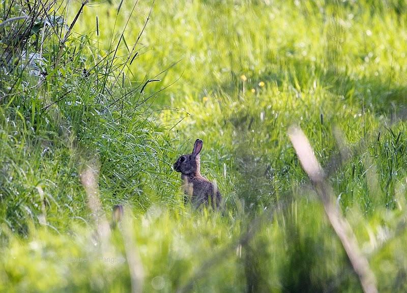 Rabbit on a way