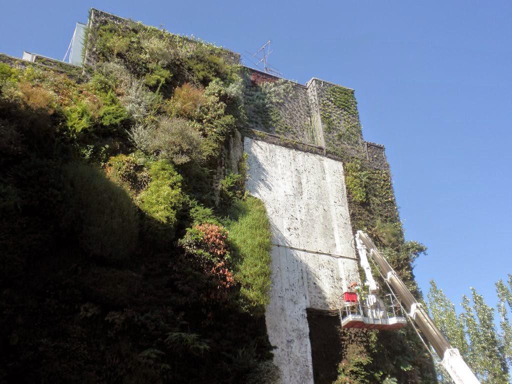 Renovaci n en el jard n vertical del caixa forum jardines verticales y cubiertas vegetales - Jardin vertical caixaforum ...