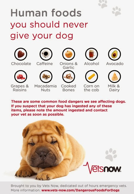 Table Foods Your Dog Should Never Eat