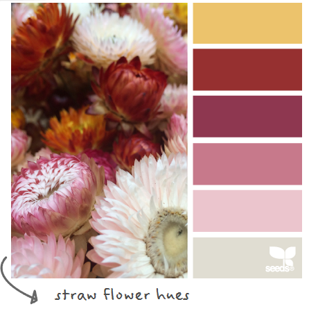 http://design-seeds.com/index.php/home/entry/straw-flower-hues