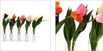Tulip Bud Vases