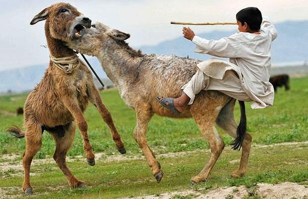 Topota Web - Tan irreal que es mentira: burro