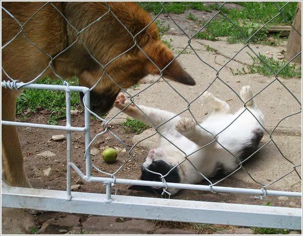 Édes állataink.
