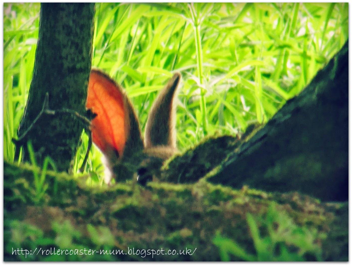 wild rabbit hiding