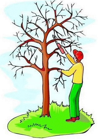 tree sense an intro to tree pruning rh hufnageltree blogspot com clip art tree trimming tree trimmer clip art