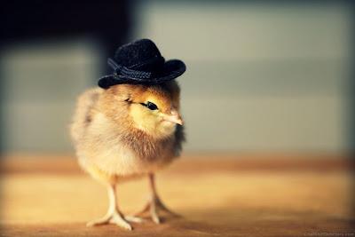 anak bebek imut