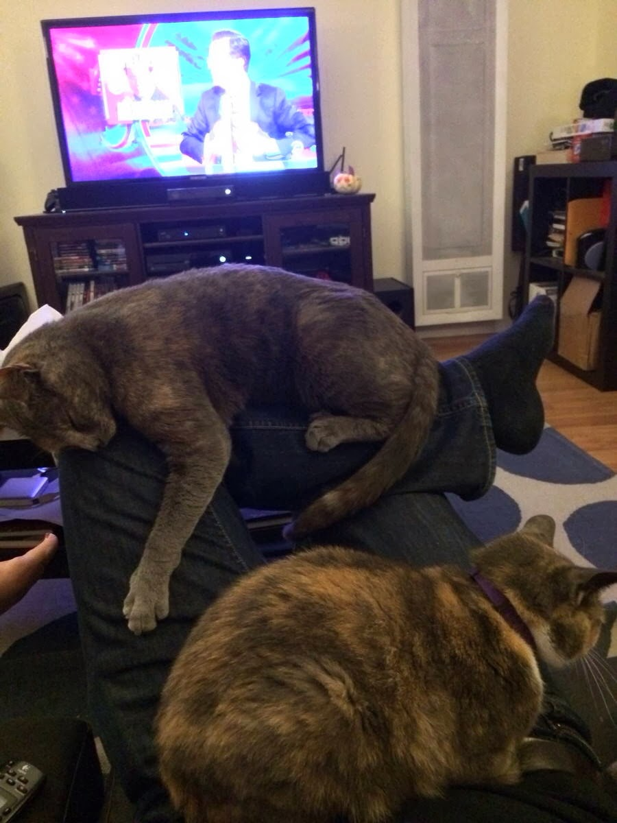 Funny cats - part 87 (40 pics + 10 gifs), two cats relaxing on guy's leg while he's watching tv