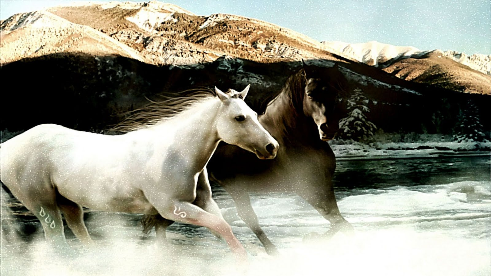 Download   Wallpaper Horse Couple - White-and-Brown-Horse-Running-Wallpaper  Snapshot_447988.jpg
