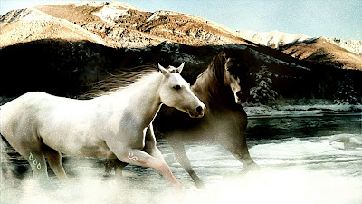 White and Brown Horse Running Wallpaper
