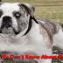 Things We Don't Know About Bulldogs