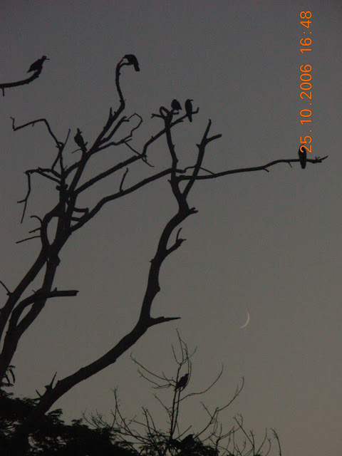 Tree with crows, in Guwahati