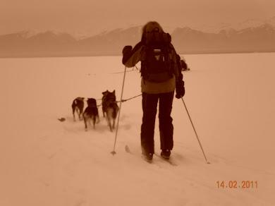 путешествие на лыжах с собаками