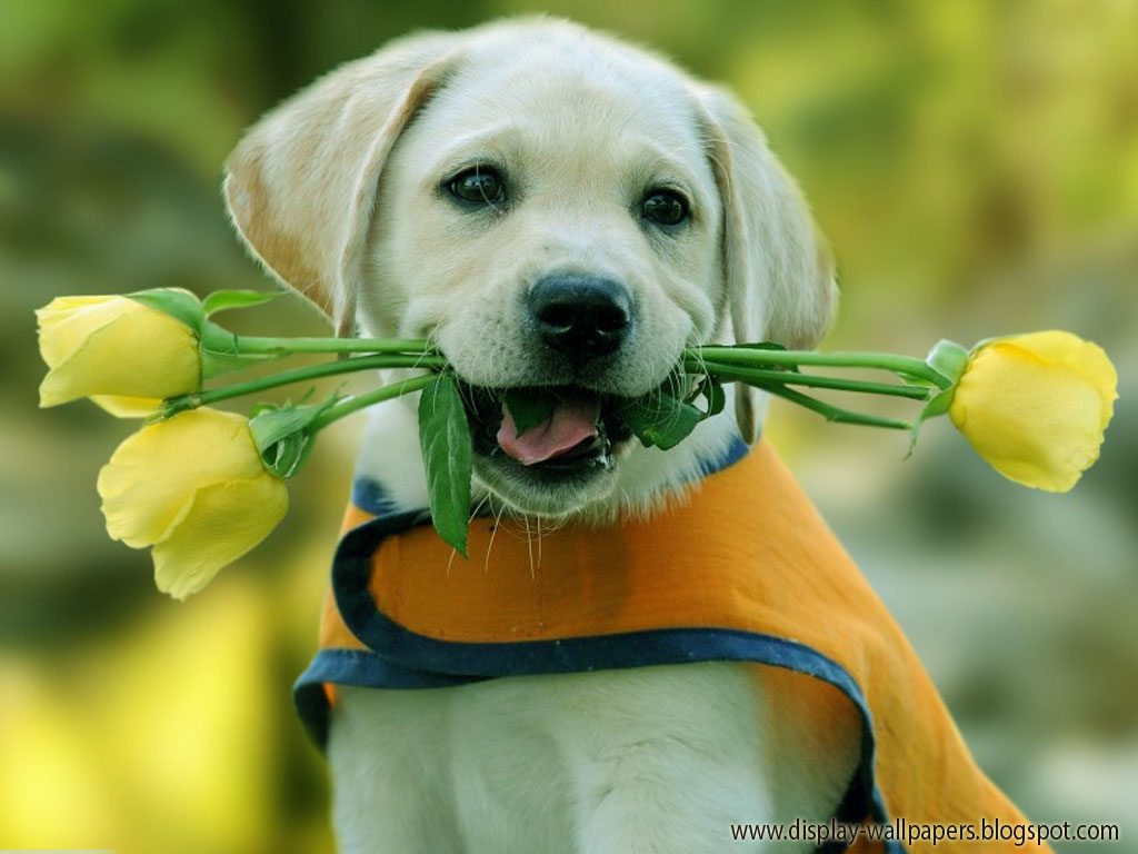 animals dog wallpaper free - photo #8