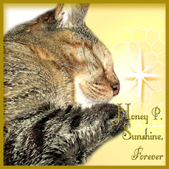 Honey P Sunshine  RIP