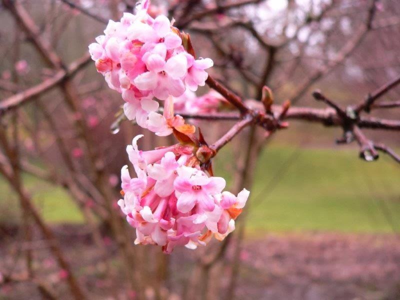 Reha Klinik Blüten Frühling Baum Strauch