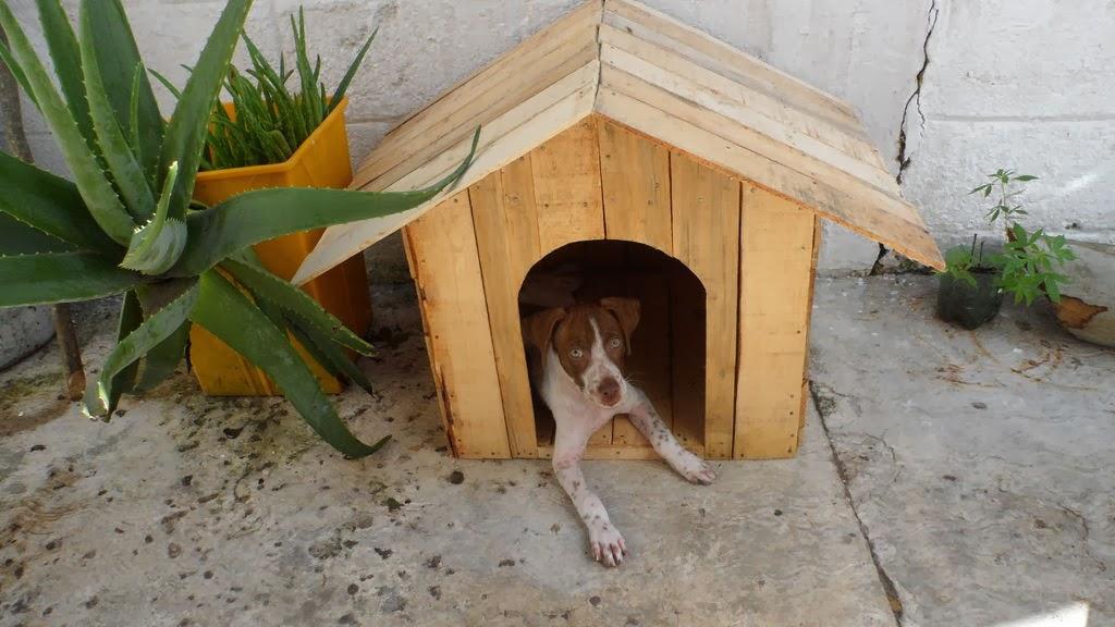 Caseta para perros hecha con cajas de - Hacer caseta de madera ...