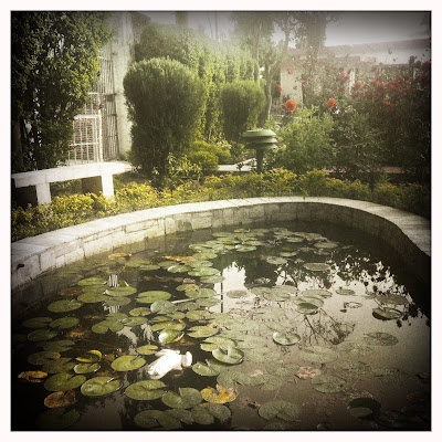 beautiful frog pond at Sadhana Mandir ashram