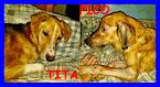 TITA e PIKO cercano ancora casa