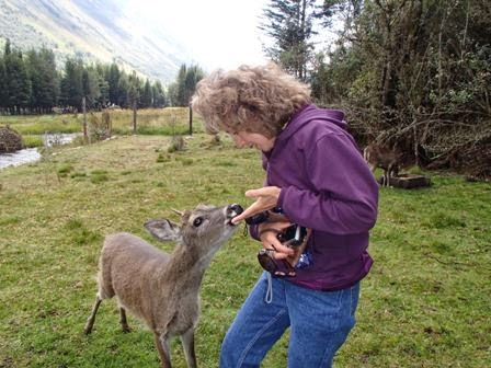 Sue With Deer