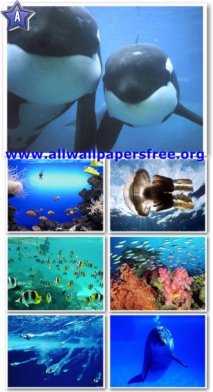 270 Amazing Underwater Wallpapers 1600 X 1200 Px