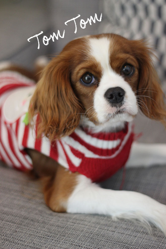 Cavalier king charles girl puppy - Christmas Jumper - UK Lifestyle blog
