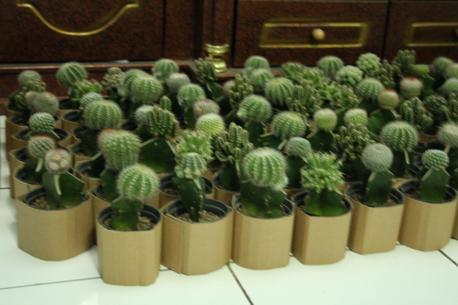 adjie kaktus souvenir kaktus mini dengan kemasan paper bag. Black Bedroom Furniture Sets. Home Design Ideas