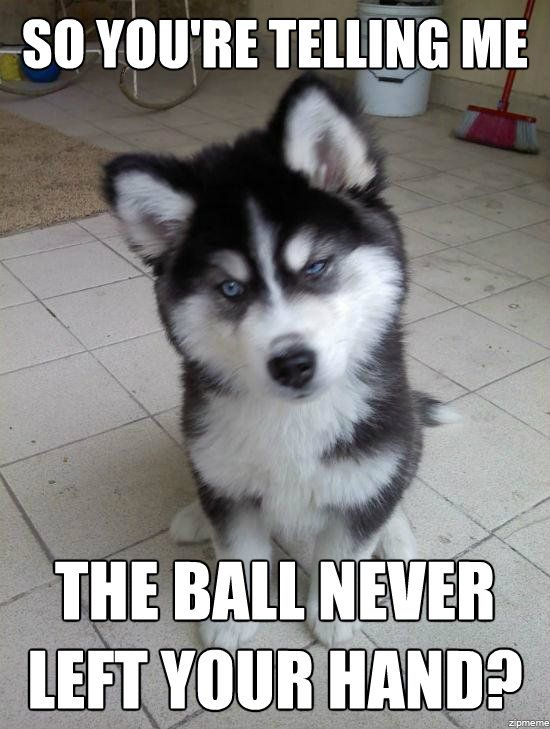 funny animal memes 004 006 30 funny animal captions part 4 (30 pics) funny animal funny