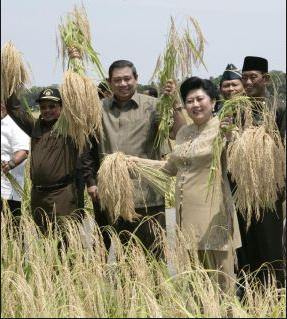 Presiden Susilo Bambang Yudhoyono panen raya di Purworejo