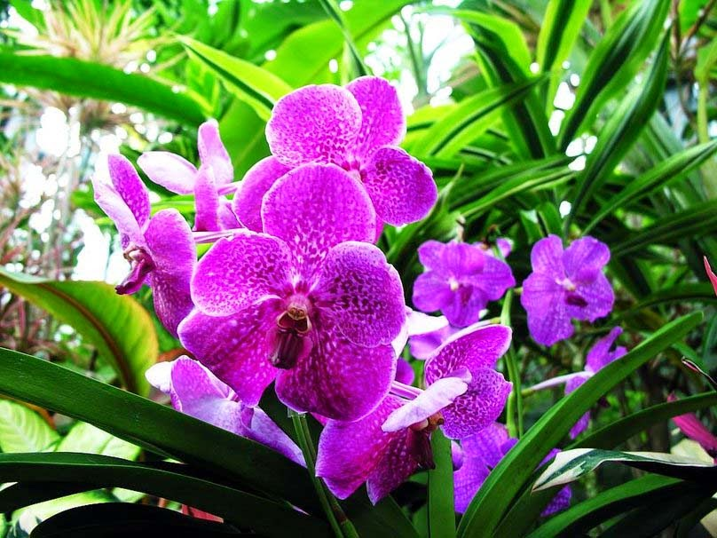 beautiful-orchid-flowers
