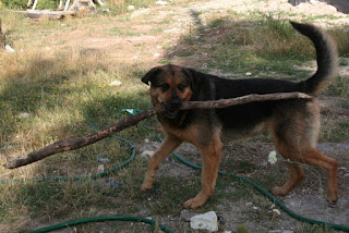 My stick