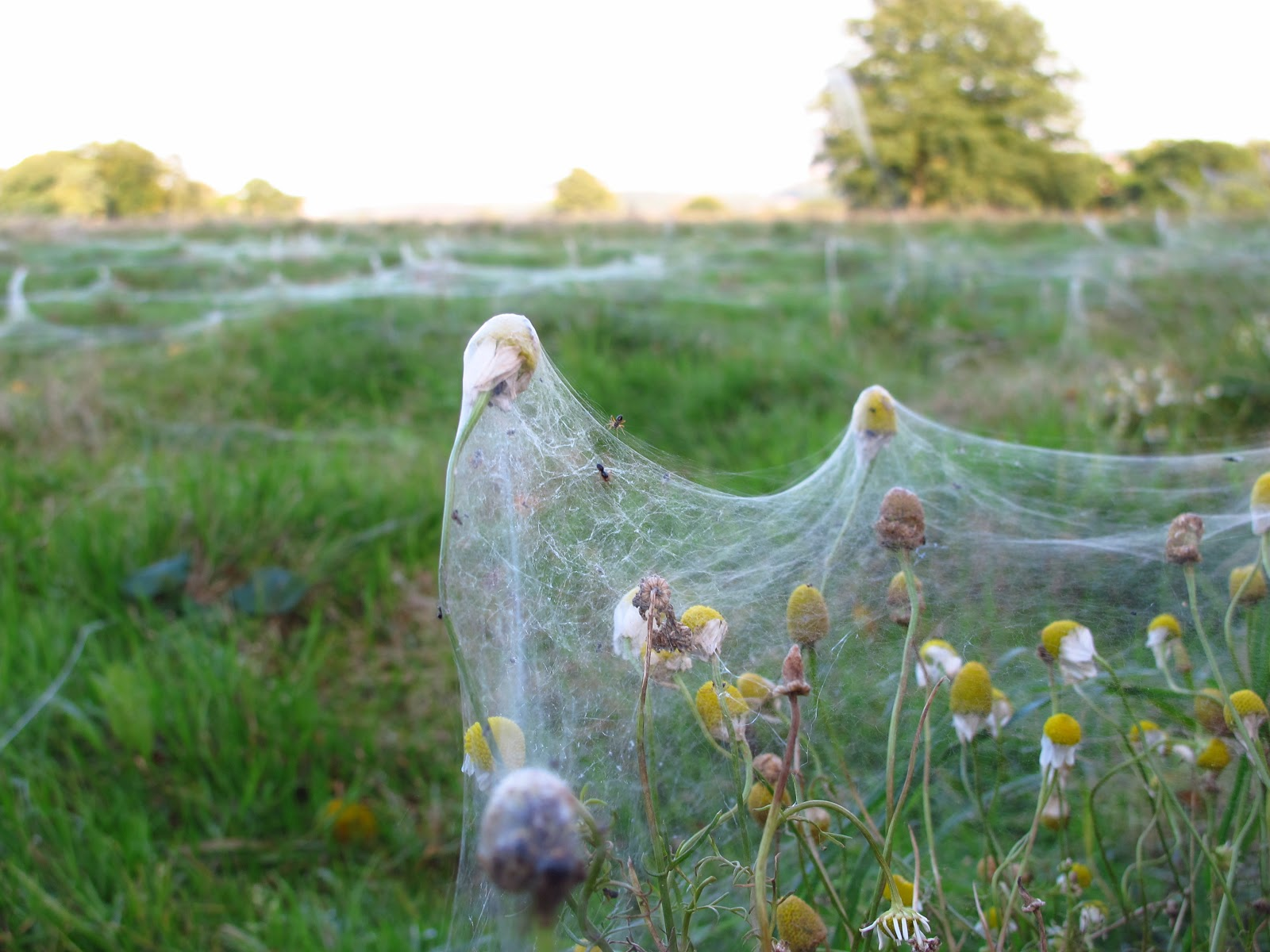 BugBlog: My spider year