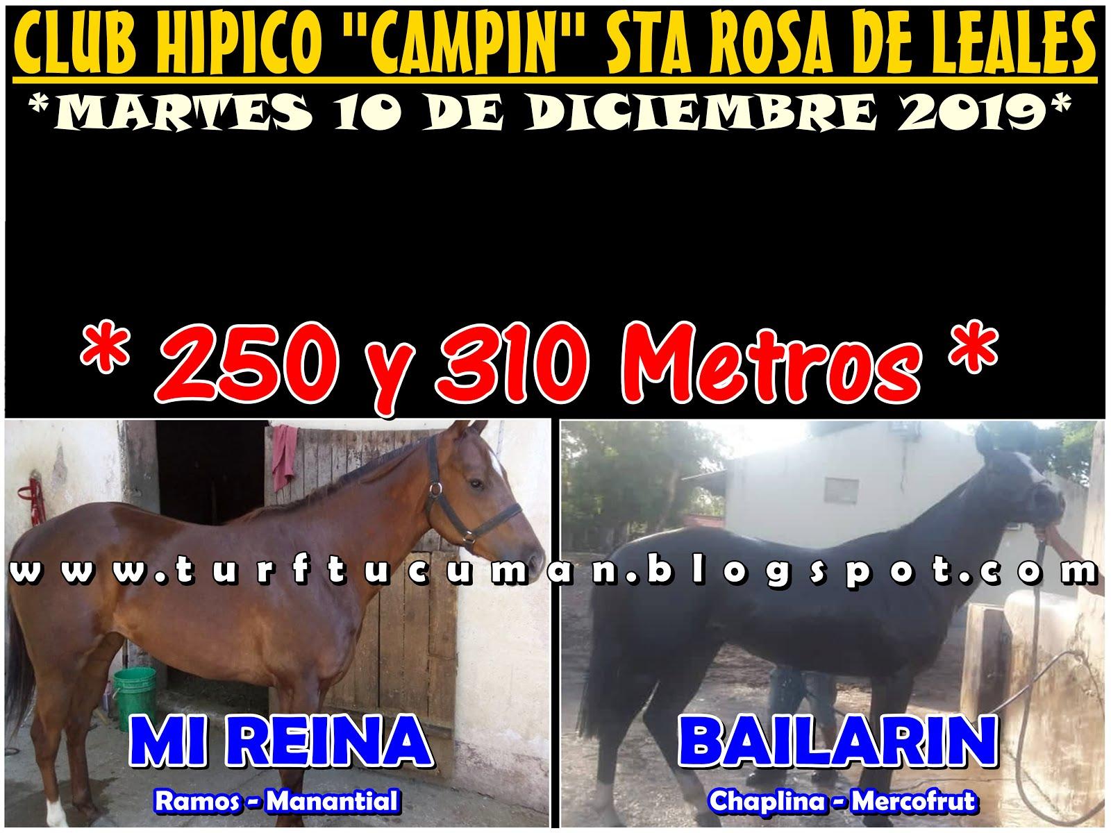 REINA VS BAILARIN