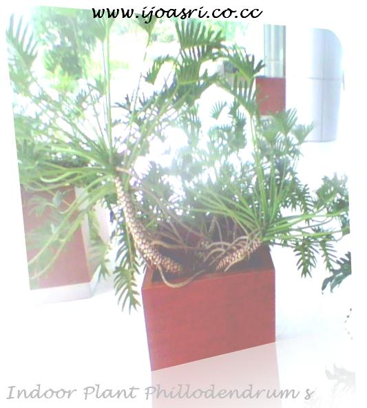 kotak tanaman