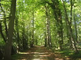 Que significa soñar con bosques
