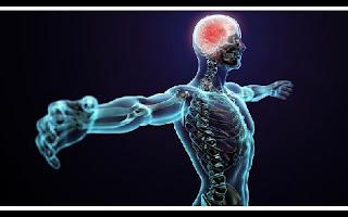 A biologia continha descobrindo funções surpreendentes nessas máquinas perfeitas que são nossos corpos. Abaixo, mostramos seis dados surpreendentes do corpo humano que talvez você não conheça: