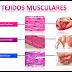 Tejidos animales 3 - Tejido Muscular