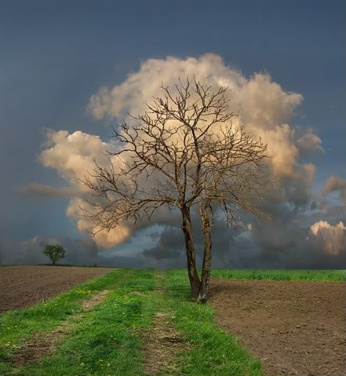 árvore nuvem