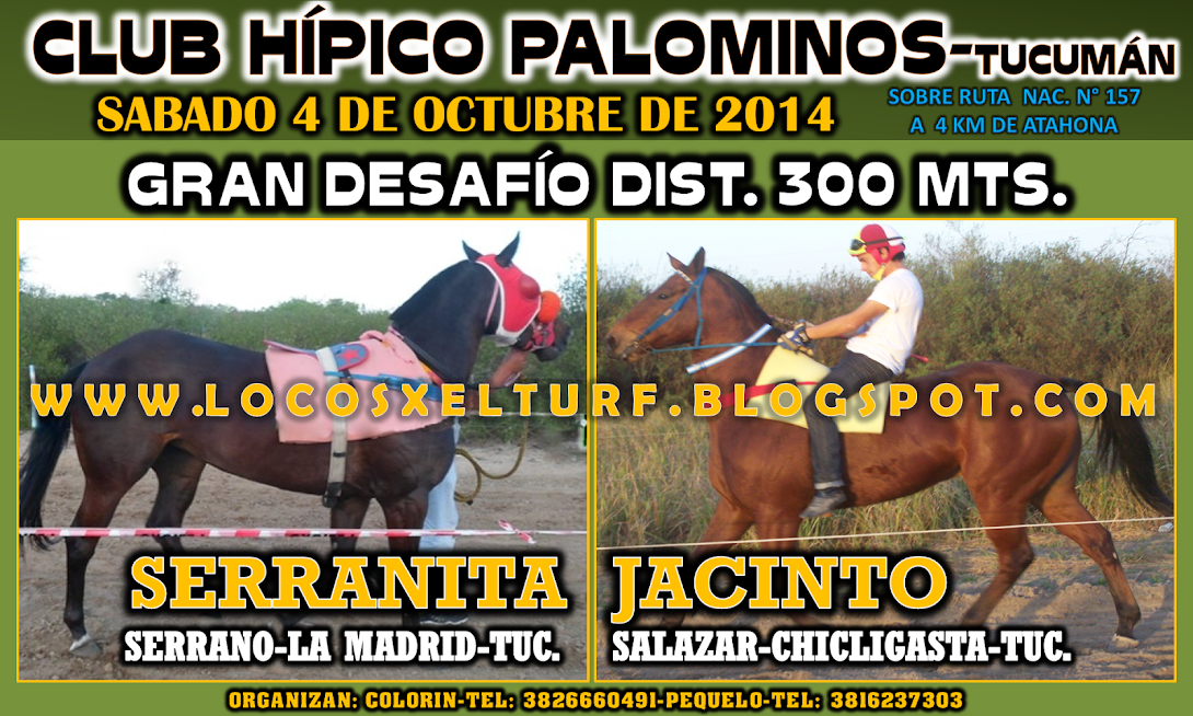 04-10-14-DESAF-HIP. PALOMINOS