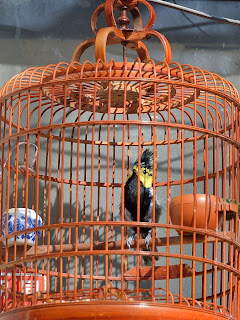 Bird in cage in hutong in Beijing