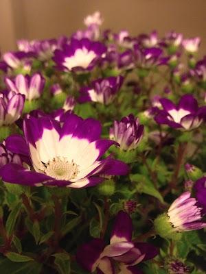 cordoba çiçek festivali