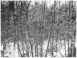 Richard Müller: Kleine Winterzeichnung
