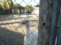 Melios Zoo - A happy experience in Nicosia