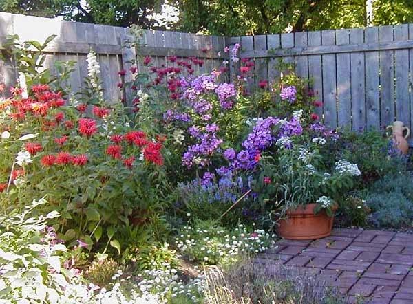 http://www.gardening.cornell.edu/homegardening/scene74a6.html