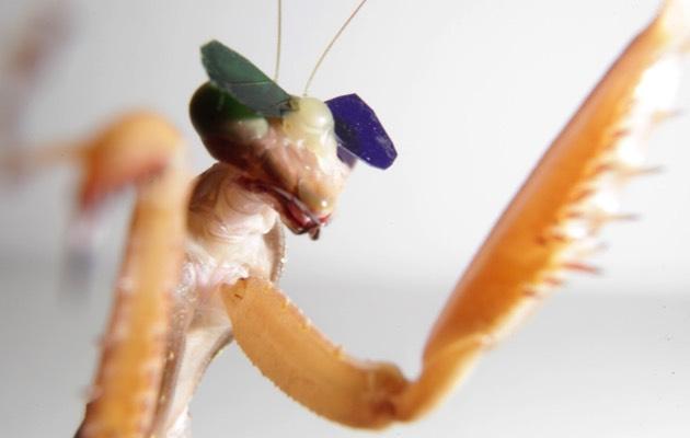 حشرة السرعوف ترى بتقنية 3D