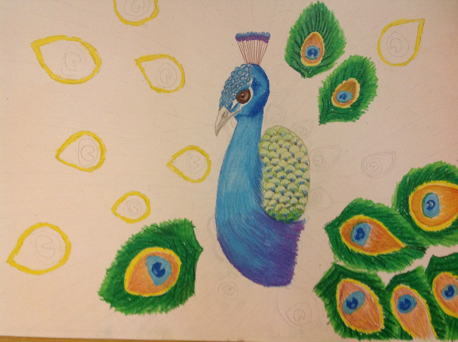 Peacock drawing step by step - photo#14