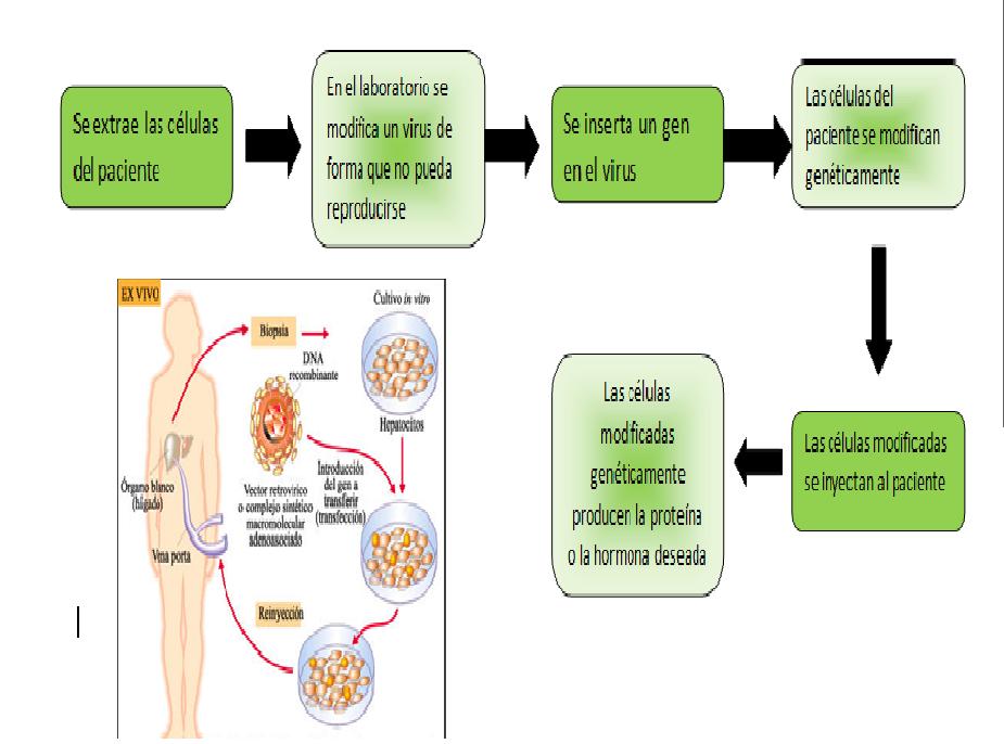 Mecanismos Moleculares de la Diabetes. Valeria Brito