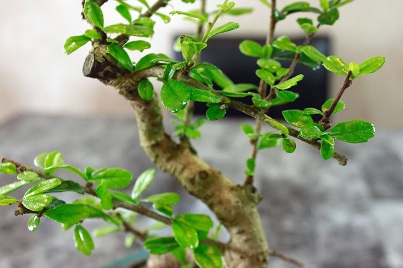 up close to a bonsai tree