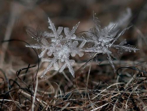 La perfección de un copo de nieve antes de fundirse
